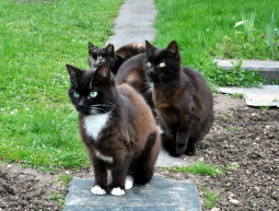 Kociaki z działki