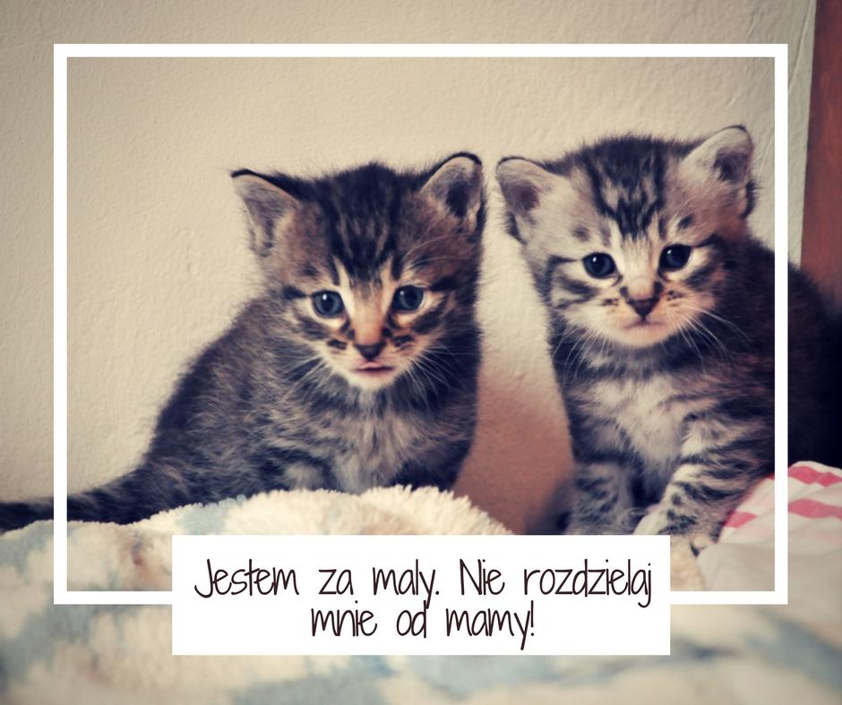Jestem za maly. Nie rozdzielaj mnie od mamy!
