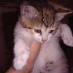 528190766_3_644x461_male-kotki-koty-bez-rodowodu_rev002