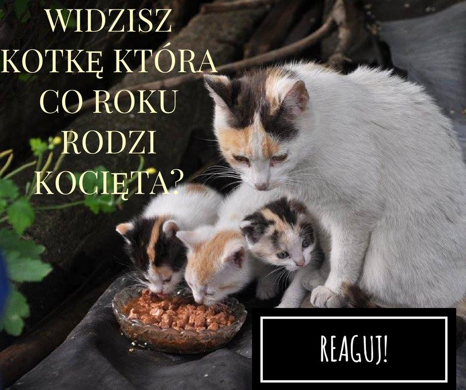 Mirelka (7)