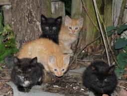5 kociaków
