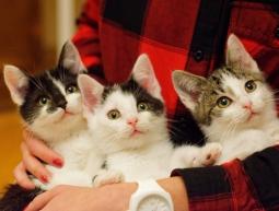 4 kociaki z Karpacza