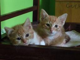 (Polski) 4 kociaki