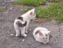 (Polski) 7 kociaków
