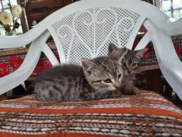 2 kociaki