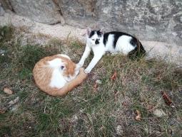 4 maluszki, została biało-czarna kotka
