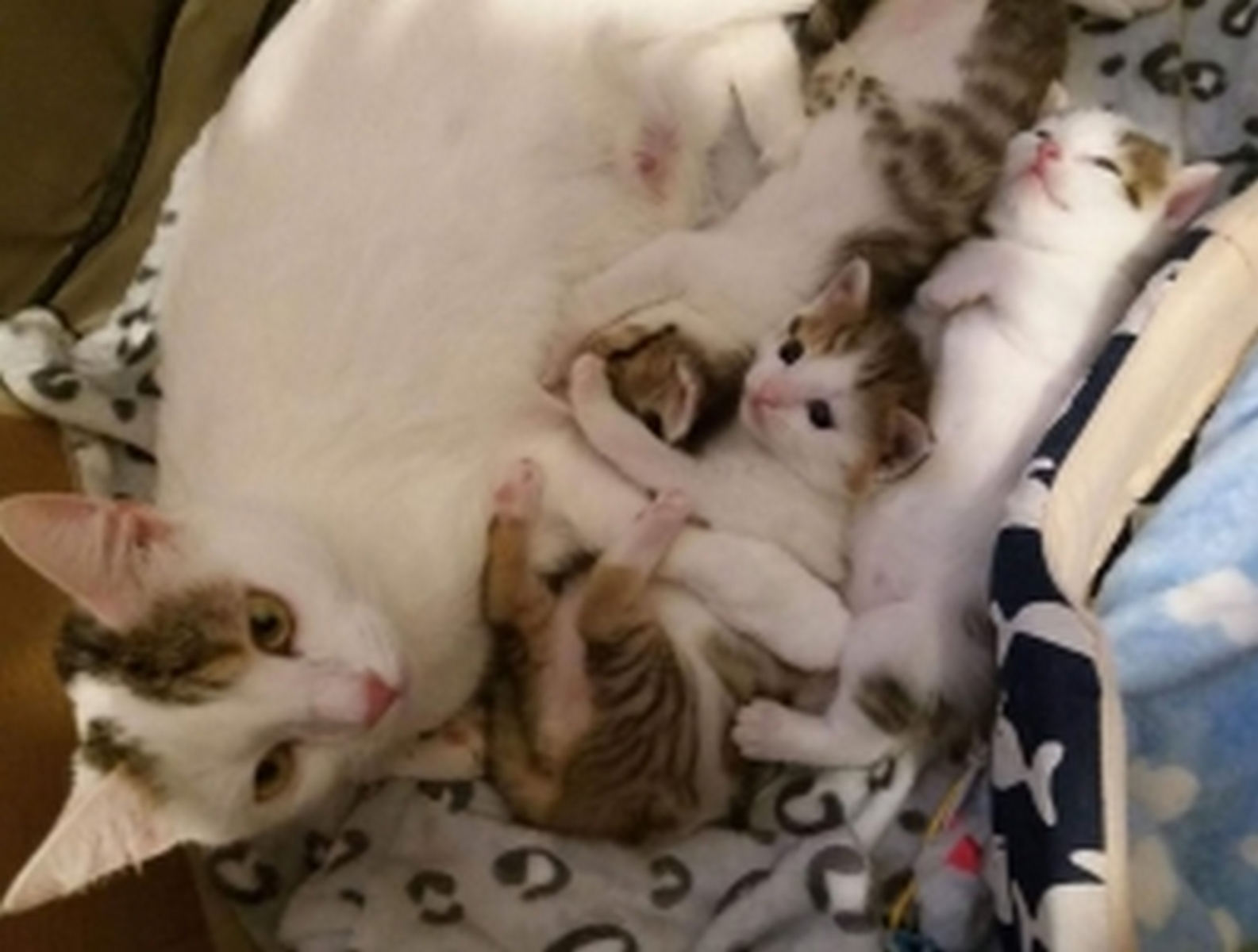 kotka i 3 małe