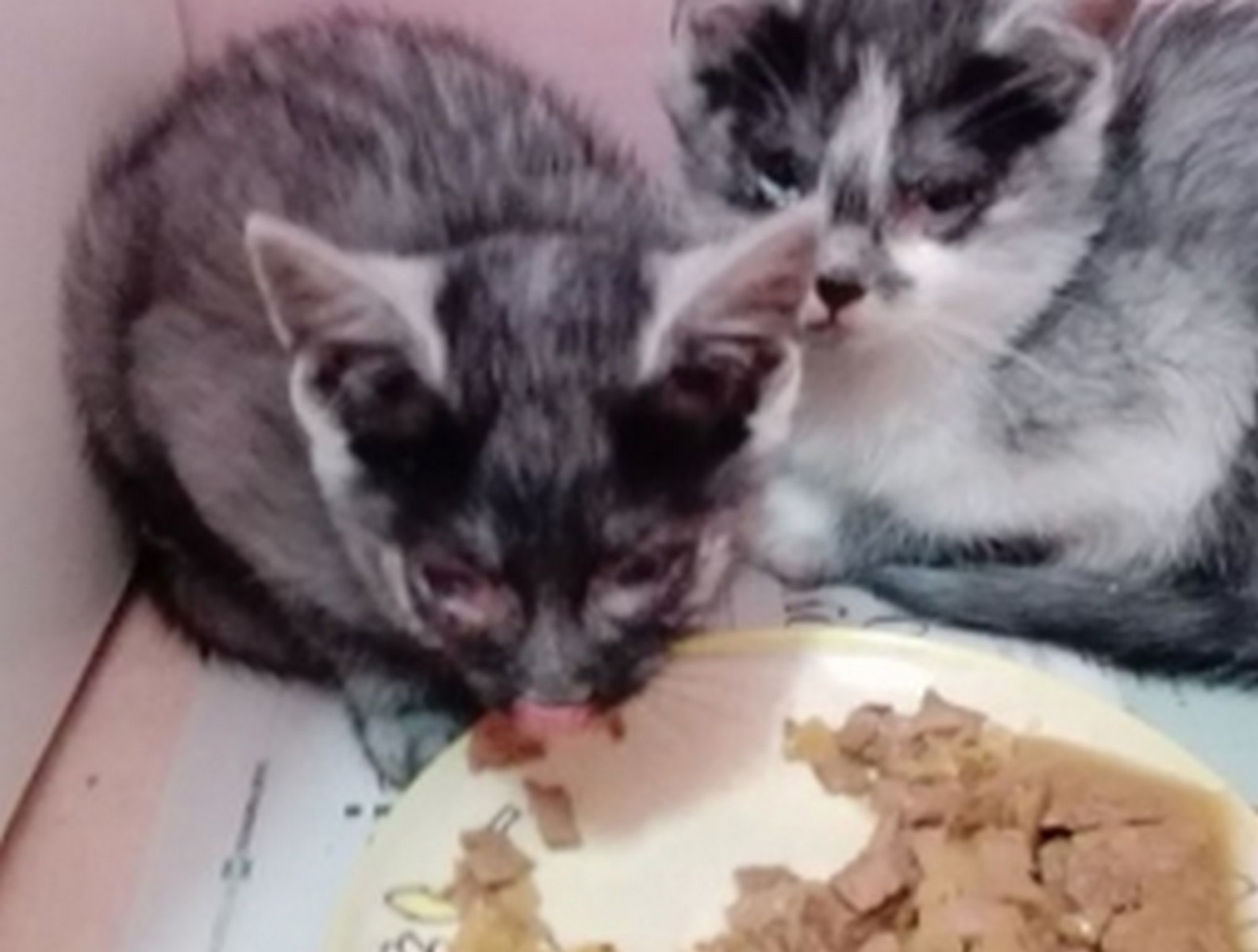 kociaki z Sosnówki