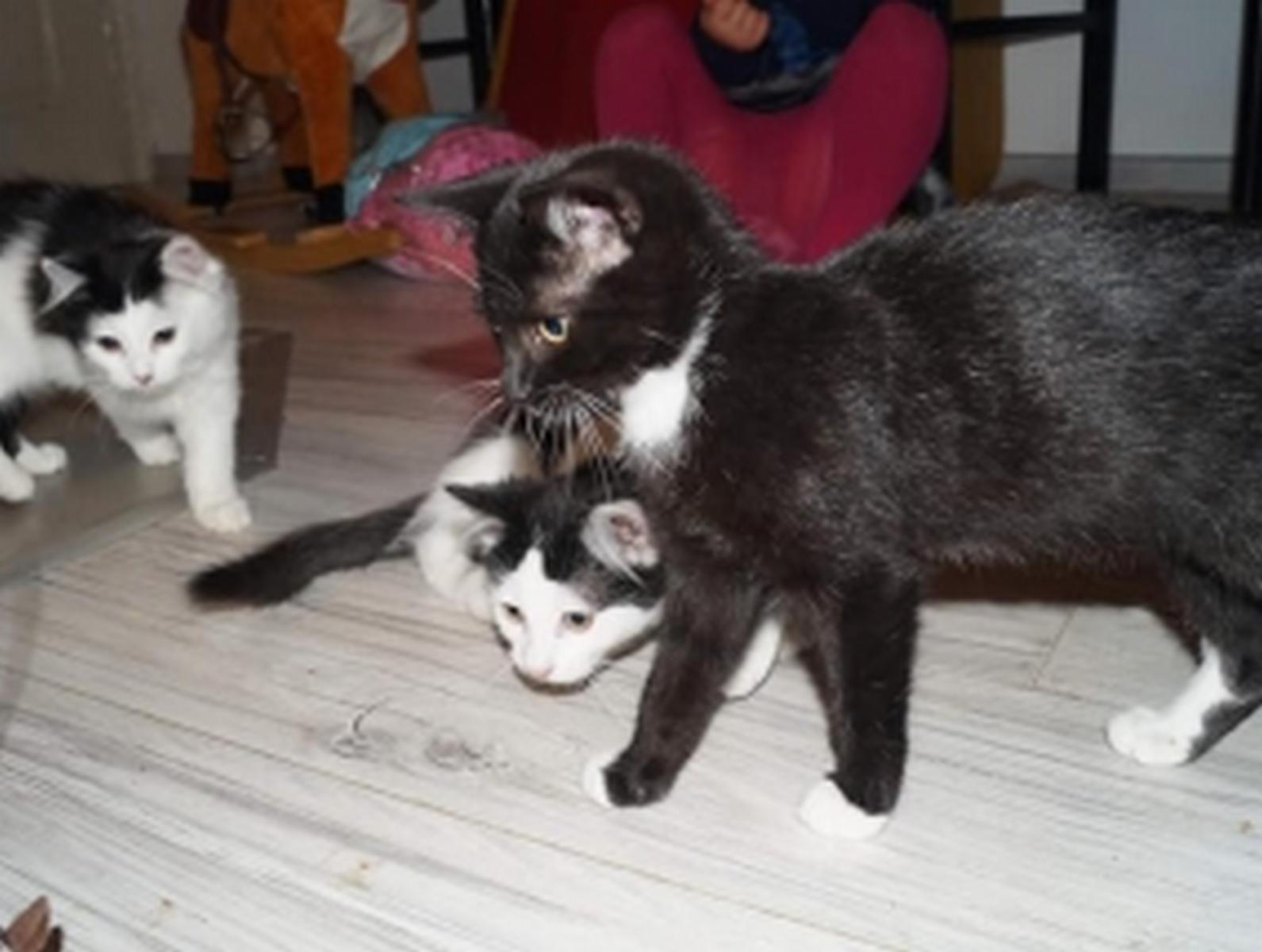 Kotki z Piechowic