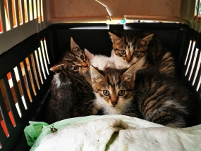 4 kociaki z piwnicy