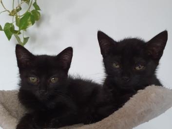 Kociaki z Drexa