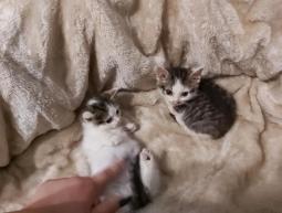 Mia, Loki i Nero