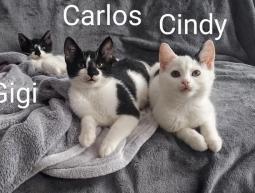 3 kociaki