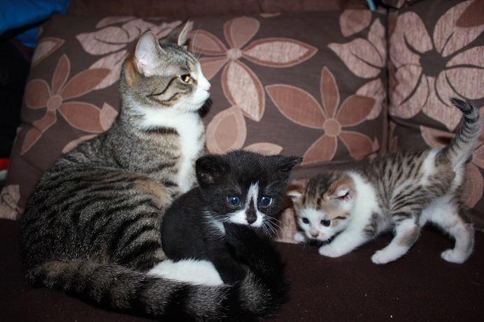 Mizia, Lilka i Rysia