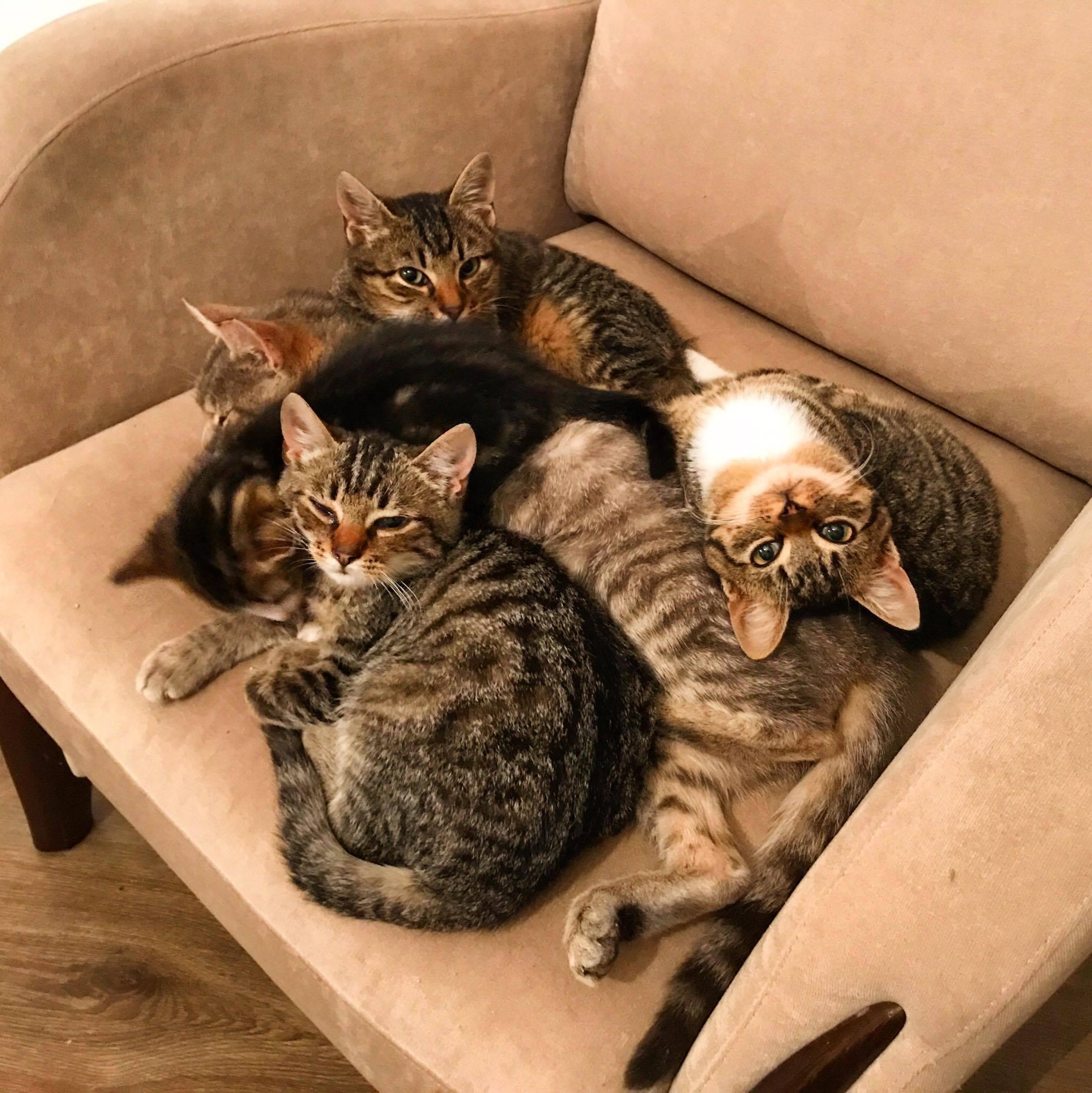 Figa,Jerry i Oskar