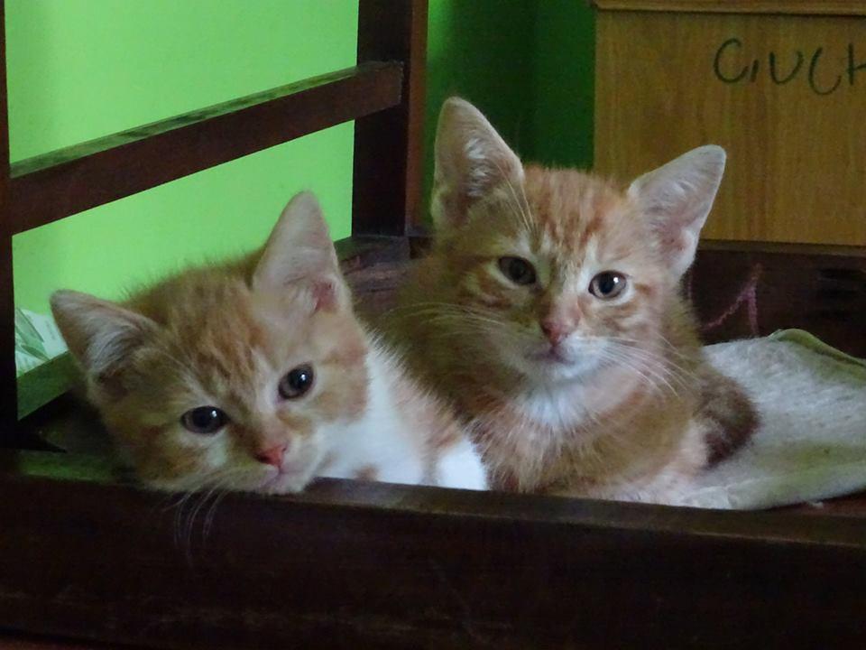 4 kociaki