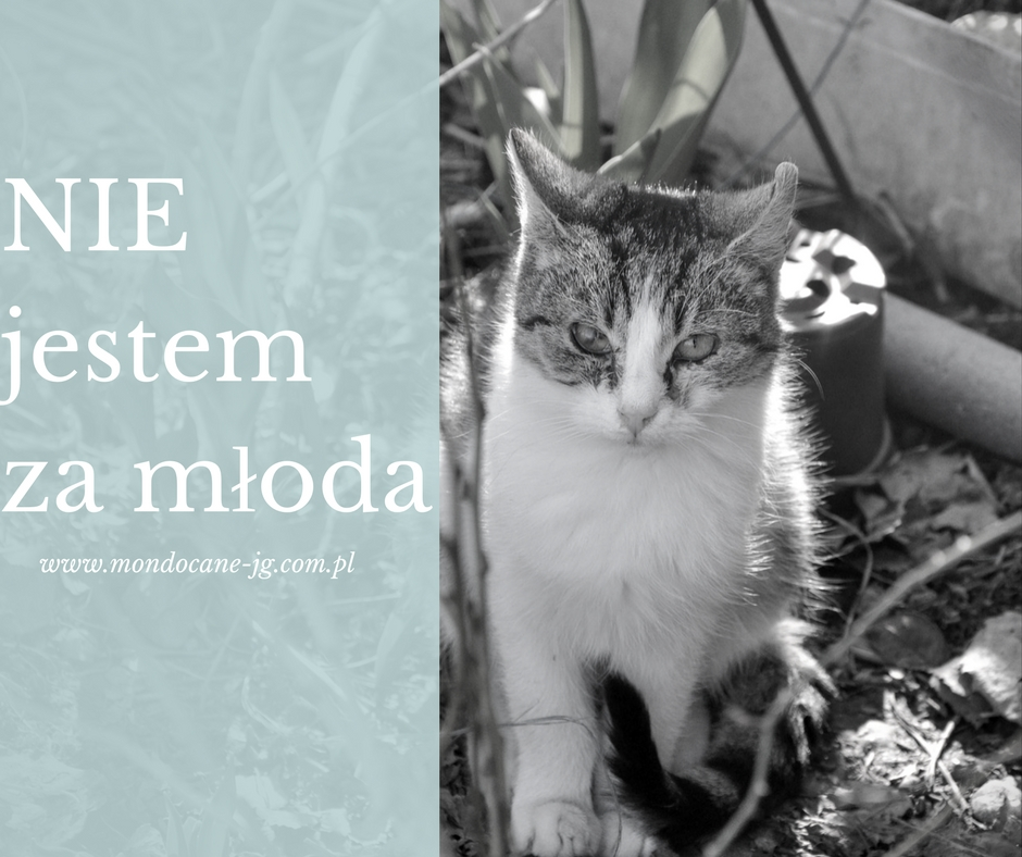 Ogromny Już 6 miesięczna kotka jest zdolna do rozrodu! | Jeleniogórski MX24