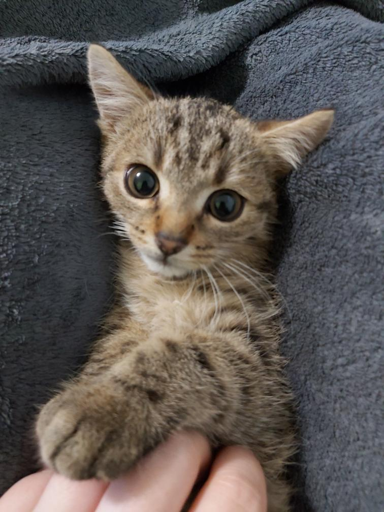 Koteczka